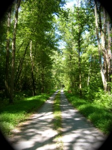 July 2011: Patuxent Research Refuge, Laurel, Md. News of Lincoln's assassination traveled on telegraph lines along this road between Washington, D.C. and Baltimore, Md., where some of those telegraph poles still stand among the trees. Photo by Molly Charboneau