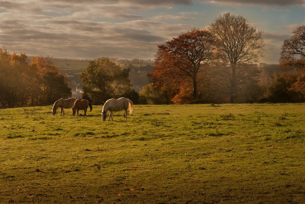 https://pixabay.com/photos/landscape-nature-horses-meadows-2984704/